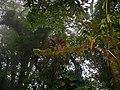 Bromeliads (7090524735).jpg