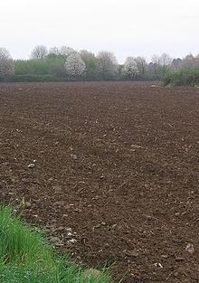 Brown earth wikipedia for Different types of soil wikipedia