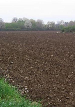 Brown earth - Brown soil