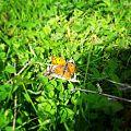 Bryagovo butterfly.jpg