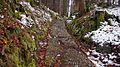 Buckelwiesen am Geißschädel Römerweg bei Klais.jpg