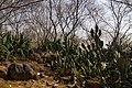 Buddha Jayanti Park - panoramio.jpg