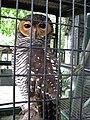 Buffy fish owl (7856482266).jpg