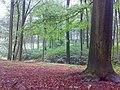 Bukový les - panoramio (3).jpg