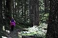 Bull Run River forest trail.jpg