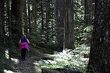 A woman, dressed in dark clothing contrasting with fuchsia hair ribbons and a fuchsia sweatshirt wrapped around her waist, hikes through a dark forest with the aid of metal walking sticks.