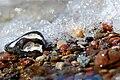 Bunte Steine am Meer.jpg
