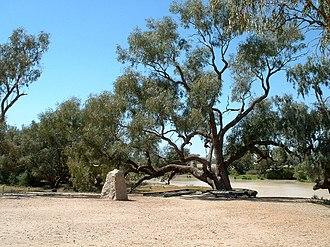 Durham, Queensland - Burke and Wills dig tree, 2008