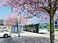 Bus STAC et arbres en fleurs au Parking Relais de Sonnaz (2017).JPG
