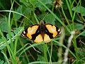 Butterfly on grass.jpg