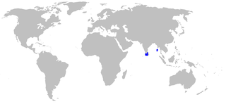 Bristly catshark species of fish