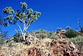 CSIRO ScienceImage 1380 Rocky Landscape.jpg