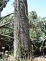 Cactus & Succulents (183437343).jpg