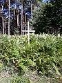 Camino Primitivo, en el bosque de Lago 02.jpg