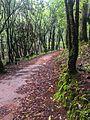 Camino de bosque.jpg