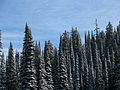 Canada - BC - 06 - dusting of snow at Vermillion pass in Kootenay National Park (4035525532).jpg