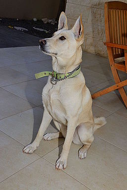 Cannan Dog Sitting how should a perfect dog behave