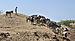 Cape Verde Fogo Goats.jpg