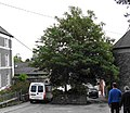Castletownshend '2 Trees' - geograph.org.uk - 506194.jpg