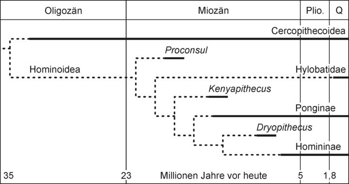 menschheit entwicklung stammbaum