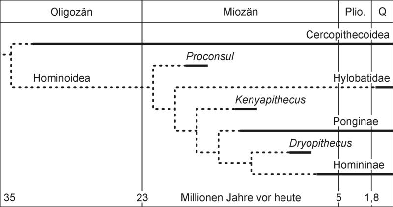 Vertebrate Palaeontology (Benton)