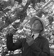 Cecil Beaton Photographs- Women's Horticultural College, Waterperry House, Oxfordshire, 1943 DB251.jpg
