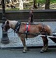 Central Park Horse Carriage (6279252913).jpg