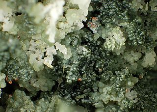 Saponite Trioctahedral (Mg2+, Fe2+) calcium smectite, phyllosilicate mineral