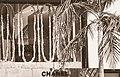 Chanel, Hollywood (32419451230).jpg