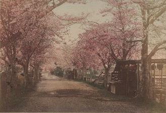 National Cherry Blossom Festival - Scidmore admired cherry blossoms in Mukojima, Sumida, Tokyo. Picture published in 1897.