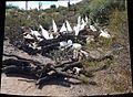 Chihuly in the Desert Botanical Garden - panoramio (3).jpg
