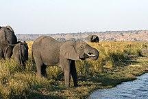 Chobe District