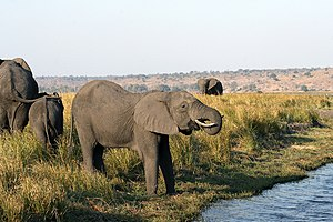 Chobe District - Game area in Chobe National Park