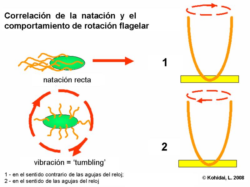 desnaturalizacion de proteinas yahoo dating