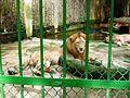 Chuồng sư tử.jpg