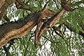 Ciervo en las ramas.jpg