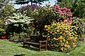 City of London Cemetery - Mixed rhododendron bed and bench.jpg