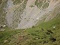 Classica marmotta - panoramio.jpg