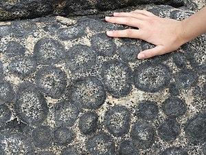 Orbicular granite - Close-up of orbicular granite near Caldera, Chile.