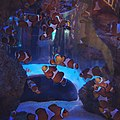 Clownfish in Two Oceans Aquarium, Capetown- - 7.jpg