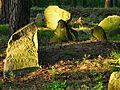 Cmentarz mahometański Studzianka 11 JoannaPyka.JPG
