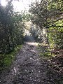 Collserola prop de Sant Cugat DSCN0181.jpg
