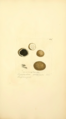 Coloured Figures of English Fungi or Mushrooms - t. 269.png