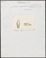 Coluber viridissimus - kop - 1700-1880 - Print - Iconographia Zoologica - Special Collections University of Amsterdam - UBA01 IZ12100135.tif