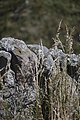 Composition in Stone and Grass (3980477362).jpg