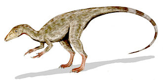 Tithonian - It is believed that the Port Waikato creature was similar to Compsognathus longipes, shown here.