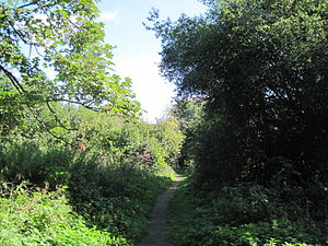 Coppett's Wood and Scrublands - Image: Coppett's Wood