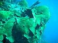 Coral (1888249147).jpg