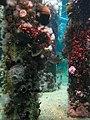 Coral Tank (3479462543).jpg