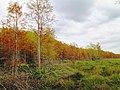 Corkscrew - transition from wet prairie to pond cypress.jpg